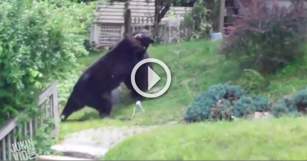 bear fight fb